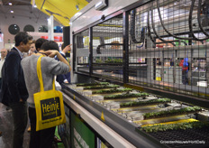 Always busy around the AutoStix of Visser Horti Systems.