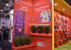 Of course, there were more varieties on display at PanAmerican Seed, like Salvia Salvatore and Leucanthemum Madonna, a Fleuroselect winner.