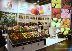 The booth of Roses Forever was not in the 'Danish Hall' (hall 6) this year. They promoted their large variety of pot roses in hall 1 this year.