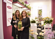 The sisters Hassinger of Hassinger Orchids. Iris, on the left, is holding a new 6cm phalaenopsis, named Tracy. Jasmin, on the right, is holding one of the products in the Cocoon concept. This concept was introduced last year and recently, they developed a new packaging for retail which protects the glass.