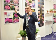 Jean-Yves Coulbault of Sicamus showing the upcoming brands; Mosaik 'Double Effect' - with double colored flowers and double colored leaves - and Confetti - with spots on the flowers. Later more on these new brands on FloralDaily.com