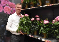 Bas van der Kraan from Beekenkamp Plants preseting the Maggiore Rose Bicolor from the Labella Dahlia serie.