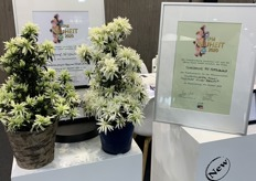 The variety also won the award for best novelty in the category flowering houseplants and also the award for best novelty over all the categories at the IPM this year.